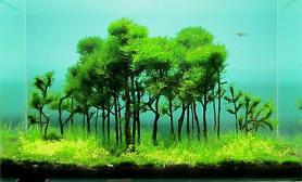 水草缸造景沉木水草泥化妆砂青龙石45CM及以下尺寸设计50