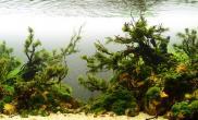 水草缸造景沉木水草泥化妆砂青龙石150CM及以上尺寸设计51