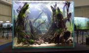 东南亚水族展会现场造景作品