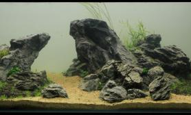 水草缸造景沉木水草泥化妆砂青龙石120CM尺寸设计25