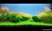 沉木青龙石水草造景120CM尺寸设计16