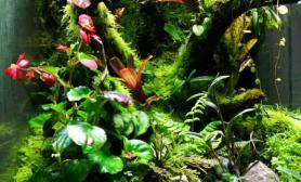 雨林缸生态缸 妖夜之领