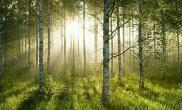 搜集的一部分树林素材