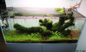 水族箱造景100cm水草缸的演变