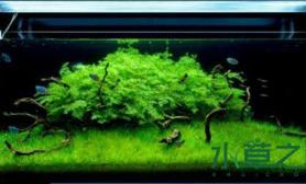 一组很有诗情画意的水草造景