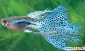 鱼有听力吗问答(图)
