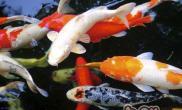 诱食剂在水族动物中的作用机制