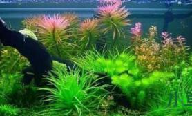 水草造景——浓缩的大自然
