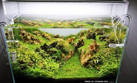 松皮石 水草造景60CM  虎皮石欣赏