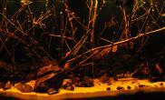 沉木青龙石原生态鱼缸34