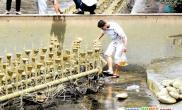 广场清洗水池市民哄抢观赏鱼(图)