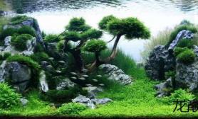 拥有这样一件作品水草缸是每一个水草造景师得追求沉木杜鹃根青龙石水草泥