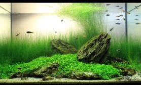 水草缸造景沉木水草泥化妆砂青龙石60CM尺寸设计31