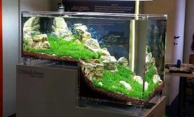 【一图流】这个缸大家见过了吧水草缸挺有创意的