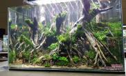 水草造景(60CM)大榕树丛林效果