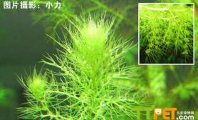 观赏水草种类有哪些
