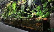 【赢阳光几何全光谱LED】向往中的雨林缸
