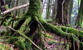1米2的树根式造景(上集)   [30P]