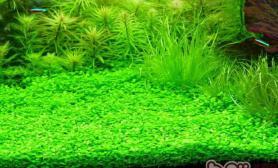 水草营养过多时会出现的症状
