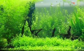 水草造景也发陋缸水草缸4个小沉木