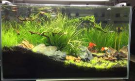 水草造景开缸造景水草缸一个半月状态更新