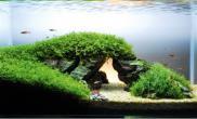 水草缸造景沉木水草泥化妆砂青龙石60CM尺寸设计39