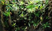 雨林水陆生态缸30