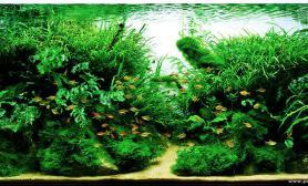 水草缸造景沉木水草泥化妆砂青龙石120CM尺寸设计39