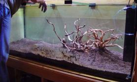 水草缸造景沉木水草泥化妆砂青龙石150CM及以上尺寸设计07