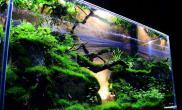 水族箱造景国外的水草缸