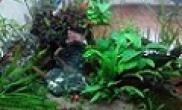 新手的成品缸水草缸阴性草灯科鱼混搭