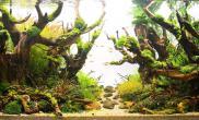水草缸造景沉木水草泥化妆砂青龙石120CM尺寸设计100