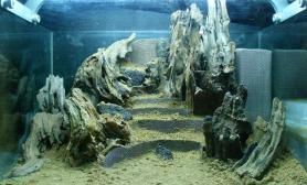 水草缸造景沉木水草泥化妆砂青龙石45CM及以下尺寸设计39
