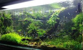 水草造景沉木造景