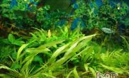 水草吸收养分的原理