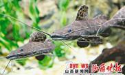 """上海水族馆""""新居民""""与游客见面(图)"""