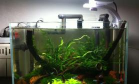 鱼缸造景小缸赏析
