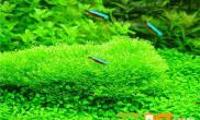 有关太阳草的繁殖介绍