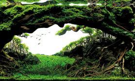 水草ADA世界级造景大赛(IAPLC2016)2016年作品欣赏前27名高清图