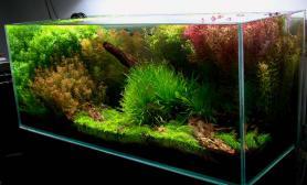 难登大雅水草缸小店的两个展示缸水草缸