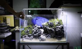 分享快乐水草缸小清新石景缸
