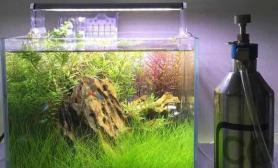 水草日记25cm小缸竟然剪出这么多水草