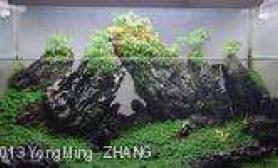 水族箱造景水陆缸图片
