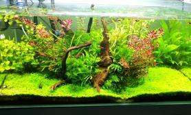 庆祝南美APP水草缸晒下老缸水草缸下周要开1图片8大缸了水草缸激动鱼缸水族箱