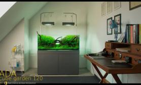 水草缸造景沉木水草泥化妆砂青龙石120CM尺寸设计85