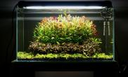 和大家分享我的一口荷兰式造景草缸