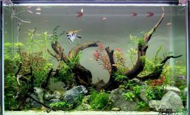 新手开缸2个月欣赏水草沉木套餐造景
