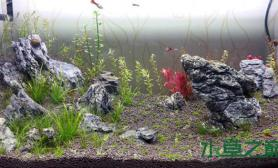 水草造景水草新手的80缸2周水草缸大家指点一下水草缸谢谢
