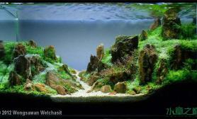 水族箱造景水草造景---幽静的山谷