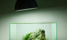 小清新微型草鱼缸造景案例主石辅石搭配造景